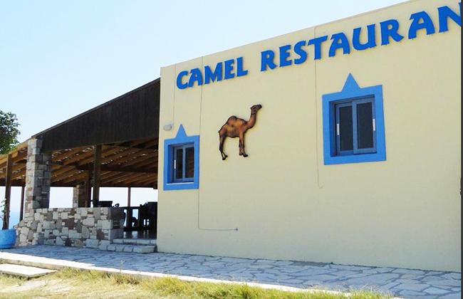 camel-01.jpg