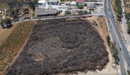«Μια σπίθα και τελειώσαμε» -Οικόπεδο με 120.000 καμένα δέντρα και αμέτρητα κούτσουρα κοντά στο Μάτι [βίντεο]