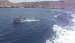 Παίζοντας με τα δελφίνια στον Κορινθιακό! Μοναδικές εικόνες – video