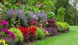 Διαγωνισμός για τον καλύτερο κήπο:Το πράσινο στην πόλη χαρίζει υγεία και είναι υπόθεση όλων μας