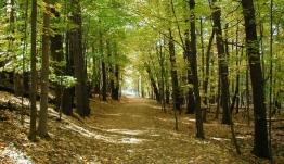 Μετά το Πάσχα η ανάρτηση των δασικών χαρτών στα Δωδεκάνησα