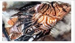 Λιμεναρχείο Κω: Επανεμφάνιση Λιονταρόψαρου